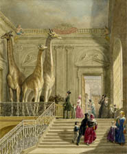 The Museum in the 18th century