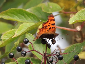 Comma  Photo by Sue