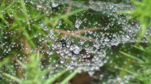 Rain on a spiders web