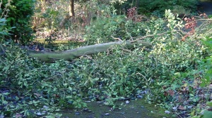 Blocked pathways by the Tarn due to fallen trees