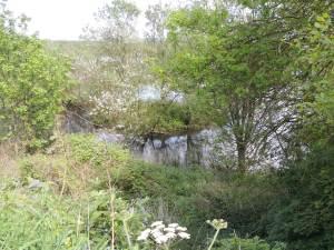 Alnmouth Marsh