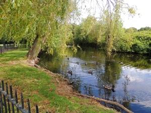 Pond - Eltham Park