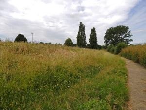 Sutcliffe park LNR