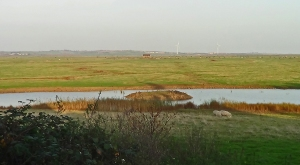 Elmley Marsh