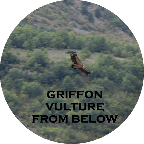 GRFFN VULTRS7-FROM BELOW