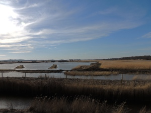Marsh and Mud-flats