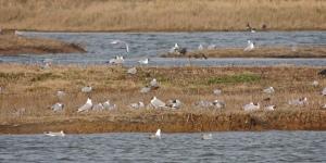 Gull colony