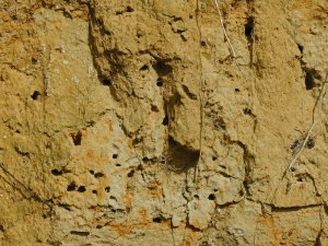 Holes in bank made by solitary bees and wasps to lay their eggs