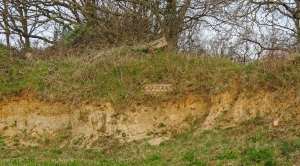 Sandbanks - an important habitat on the reserve