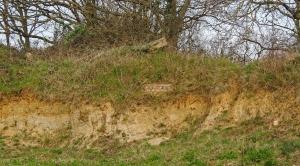 Sandbanks - an important habitat on the reserve