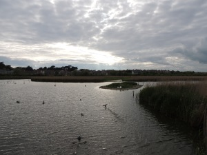 RSPB reserve at Radipole Weymouth