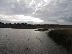 RSPB reserve at Radipole Weymouth