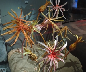 A model of how Crinoids would have looked.