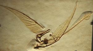 Cast of pterosaur