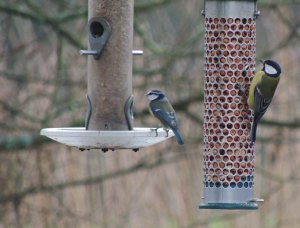 Blue (left) and Great Tit on feeders
