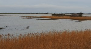 View from Nelson-Lyall hide