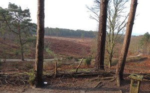 Heathland and Woodlands at Pulborough Brooks reserve