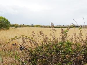 RSPB Lodmoor