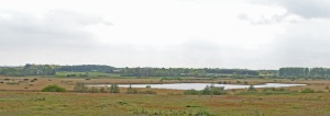 Island Mere surrounded by reed-bed
