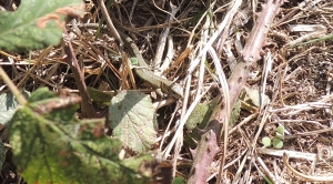 Basking Lizard