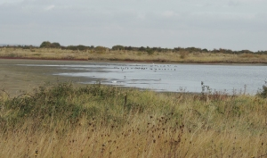 Waders gathering on marsh pools