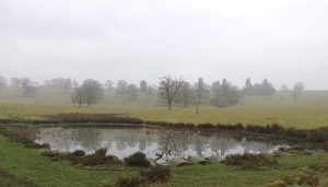 Parkland surrounding Launde Abbey