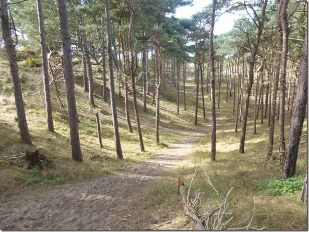 27 Formby Pinewoods